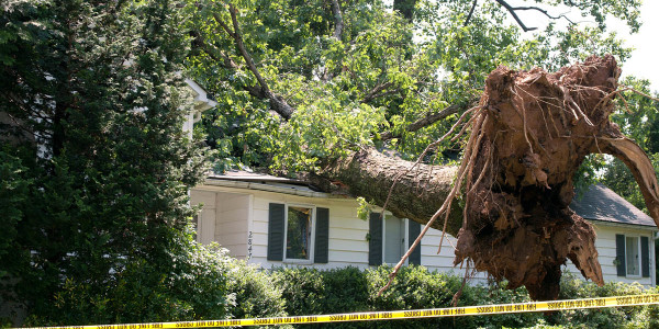 wind damage to roof damaged by tree